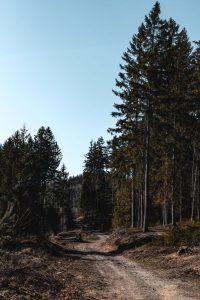 Tree Fire Mitigation Mountain Property